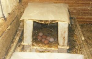 Гнездо для наседки