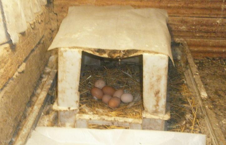 Гнезда для индюков своими руками