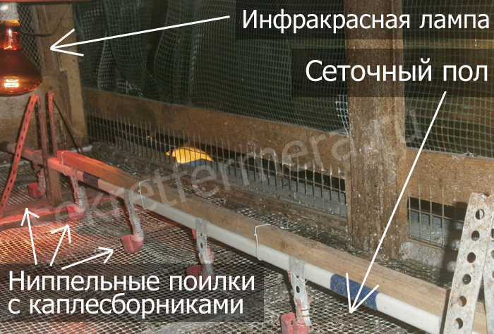 клетка для бройлерных цыплят изнутри с сеточным полом, инфракрасной лампой и ниппельными поилками