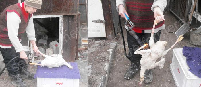 Шаг №3: Опалить тушку газовой гарелкой