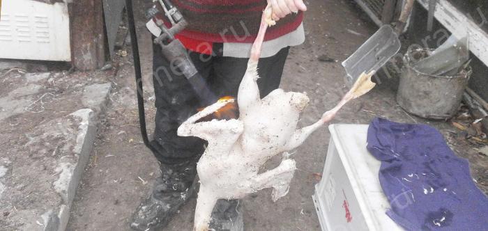 Как забивать гусей