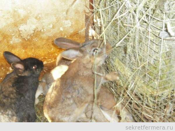 Выращивание кроликов зимой 56