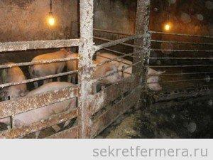 Как сделать пол для свиней своими руками 26