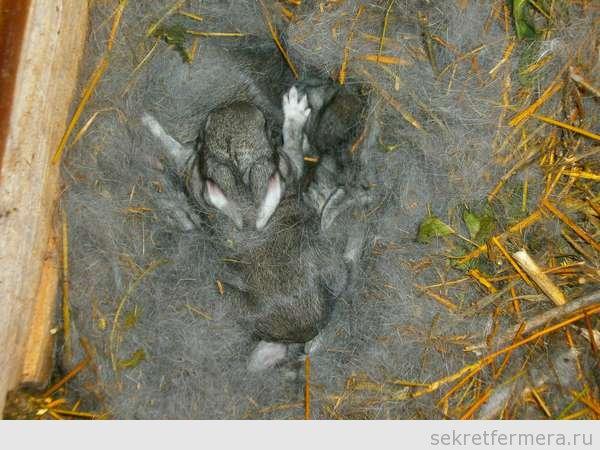 Крольчатам 2 недели