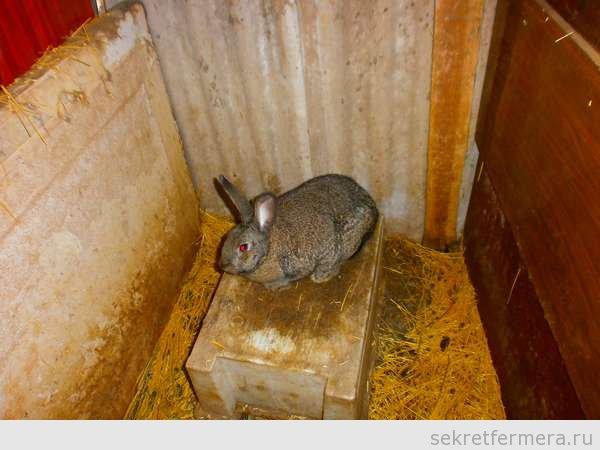 Крольчиха после окрола