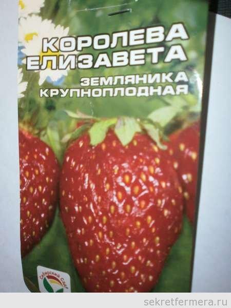 Выращивание из семян земляника елизавета 9