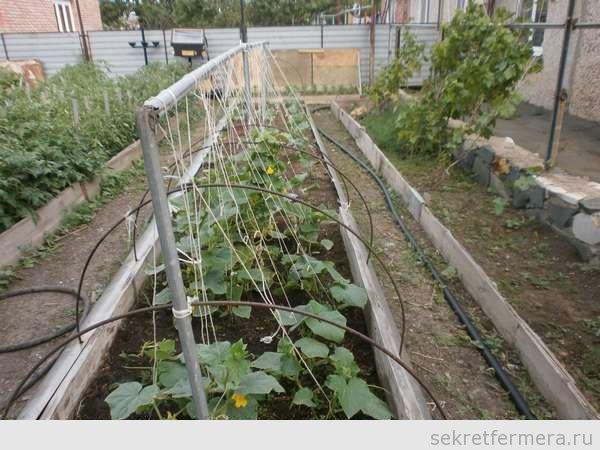 Выращивание огурцов в грунте на шпалере 233